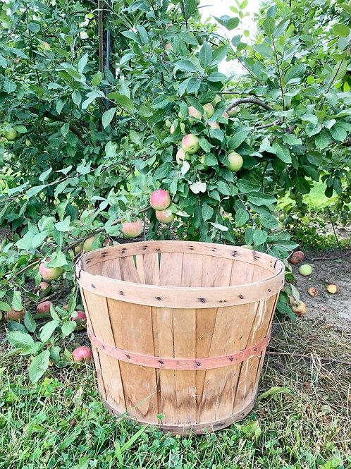 Bushel Basket from Lapacek's Orchard