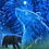 Thumbnail: The Bear in the Stars greetings card