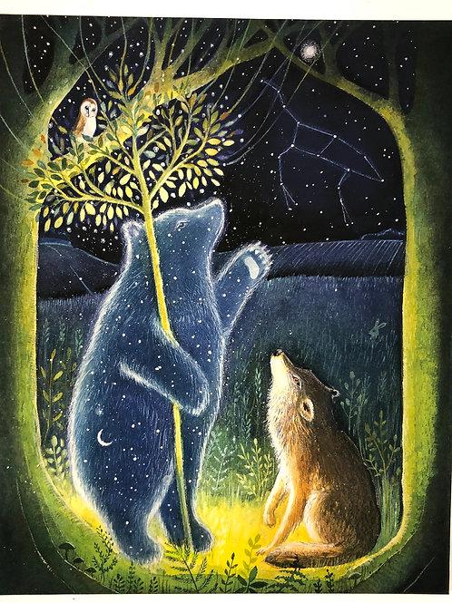 the Star Bear -  Canvas boxed print