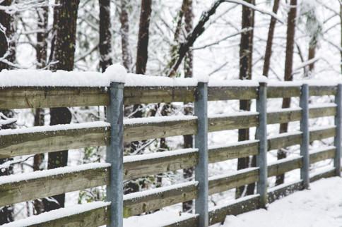 Snowy Fence Posts