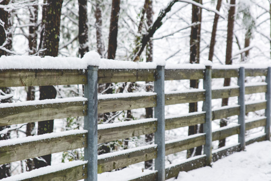 Snowy Fence Posts
