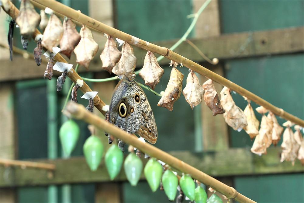 The World's Beautiful Butterflies