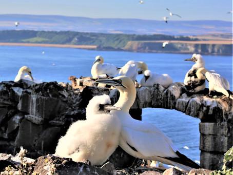 Top Four Places To Enjoy Bird Watching