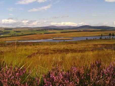 Flower Of Scotland Heather - A Wee Highland Coo Van Adventure