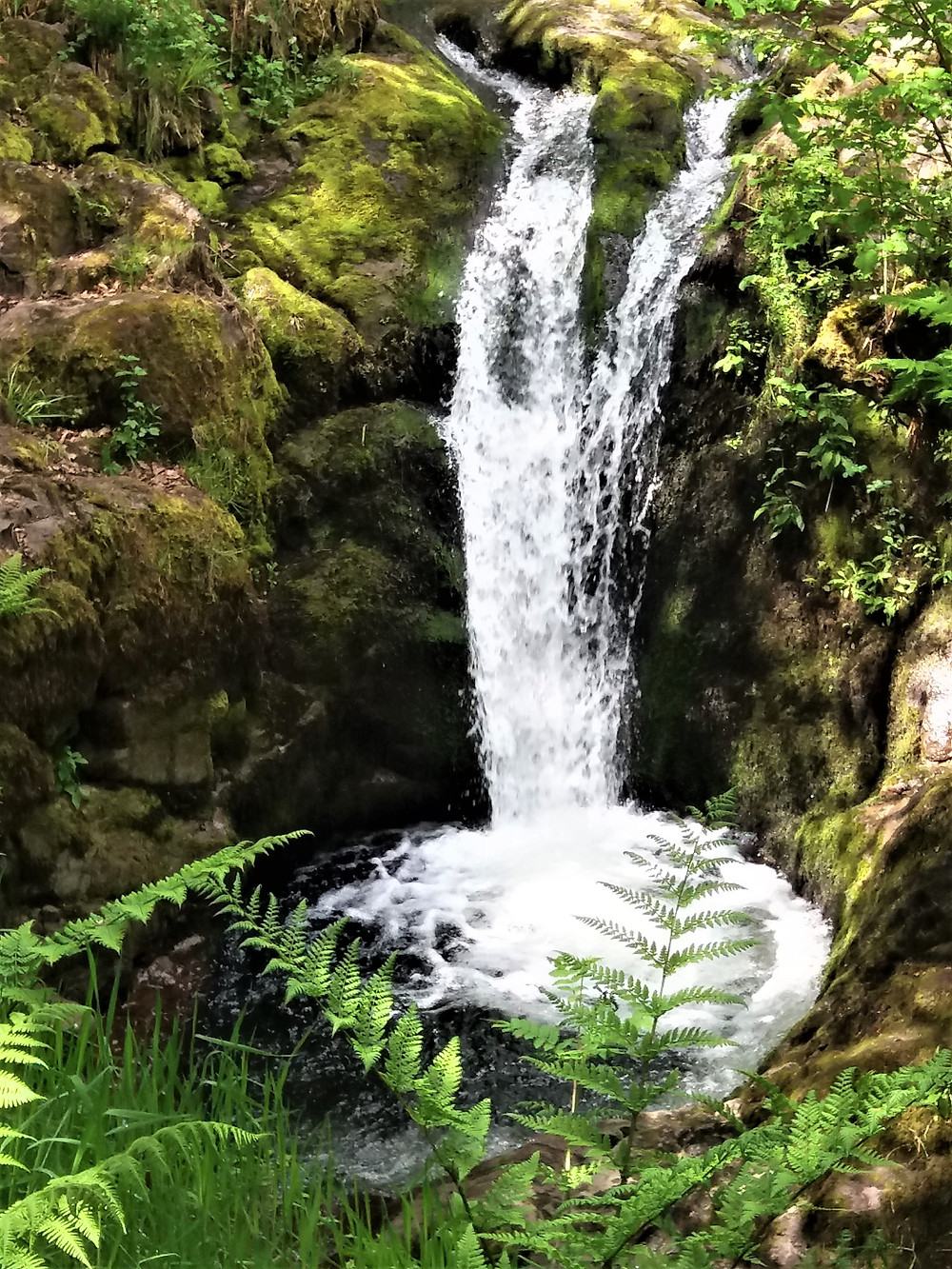 The fern gully Dollar glen, with mos covered stones and trees, with the plunging rapid waterfall.