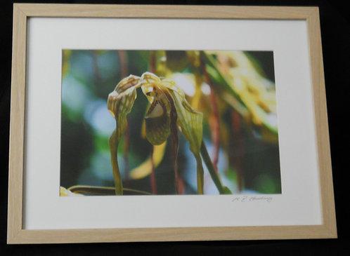 Orchid, Peru. ©MDHarding