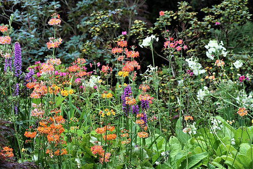 Seasonal Gift Cards For all Occasions - Summer Herbaceous Border