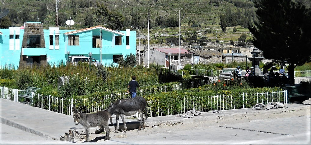 Grey donkeys in a small village, Peru