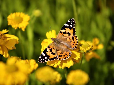 Spring Into Action With These Fun Garden Ideas