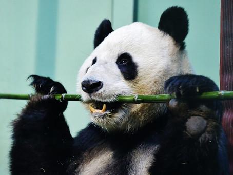 Celebrate Chinese New Year in Edinburgh