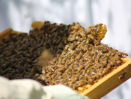 The World Of Honey