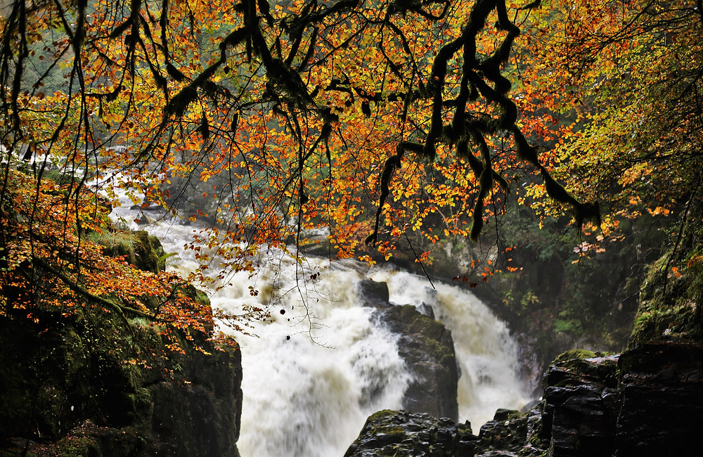 Black Linn Falls surrounded by the autumn coloured foliage.
