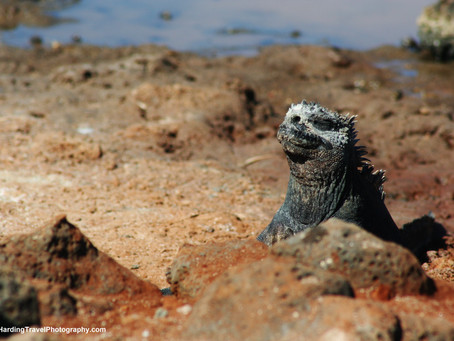 Visiting The Galapagos Islands By Cruise Ship