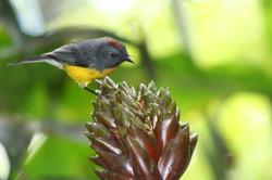 ©MDHarding Small Bird, Peru