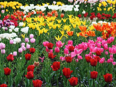 Scotland's Best Seasonal Garden - Cambo Estate