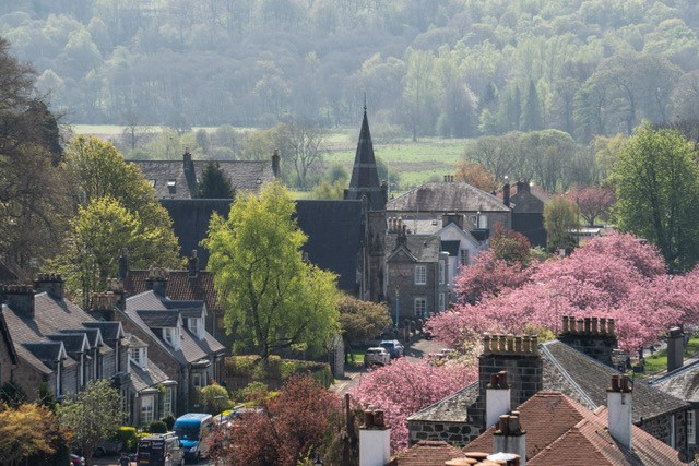 Vantage point photograph of Dollar town and the cherry trees in blossom.
