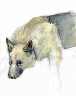 German Shepherd Pastel.jpg