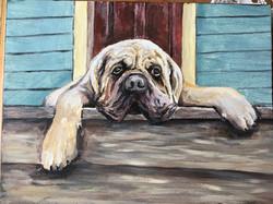 Mastiff Portrait