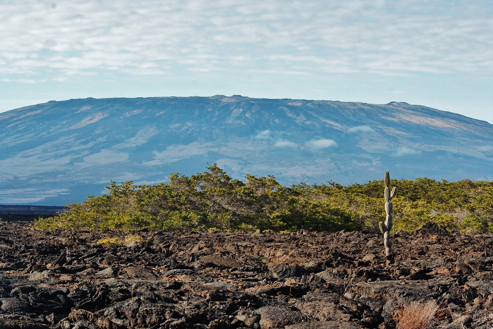 Lava Fields On The Galapagos Islands