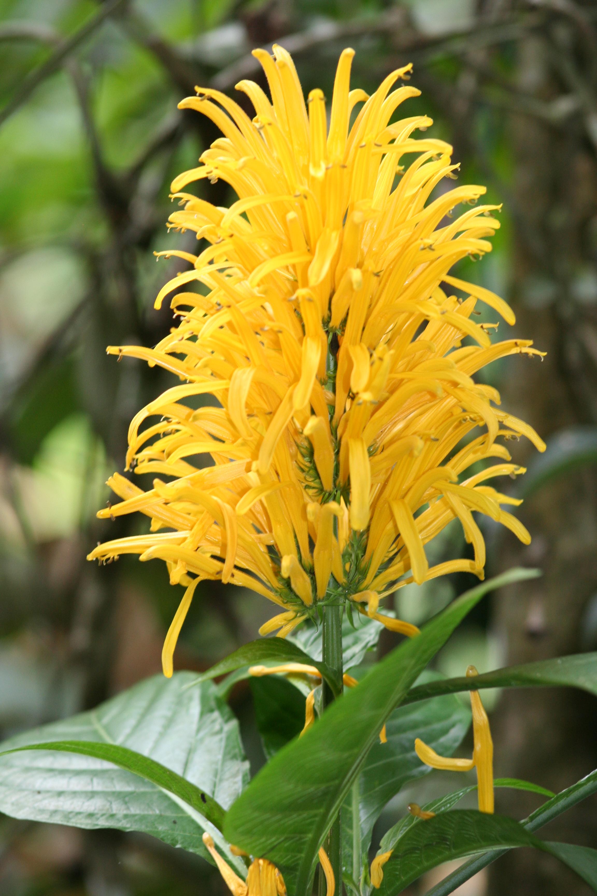 ©MDHarding Brazilian Plume, India