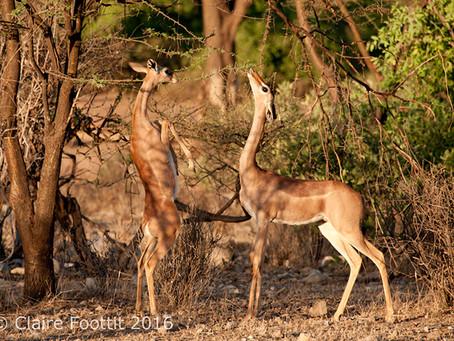 A to Z Travel Blog - Kenya