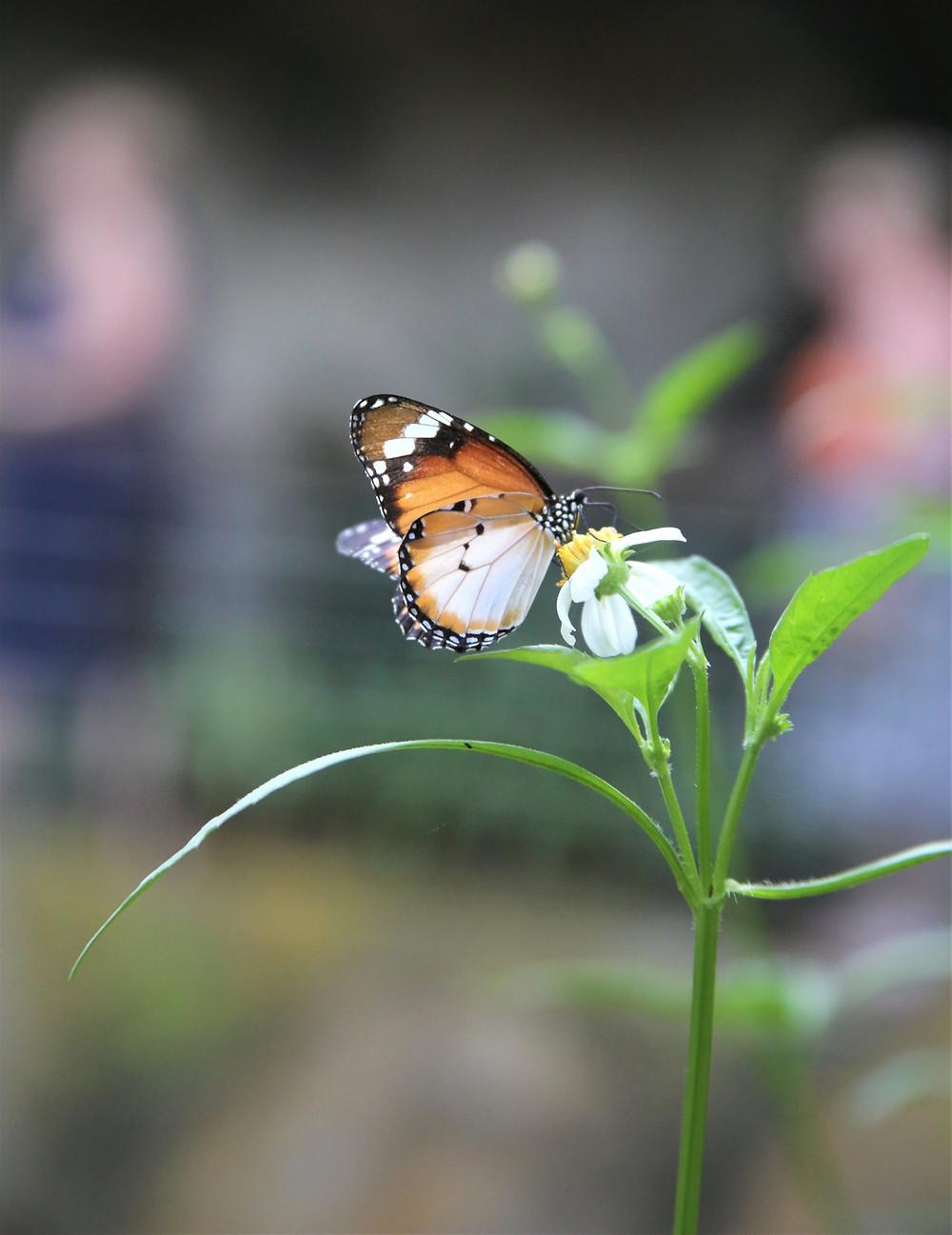 World's Most Beautiful Butterflies