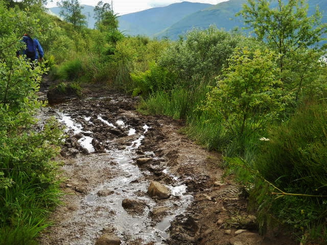 The_muddy_path_of_Ben_Lomond_©MDHarding.JPG