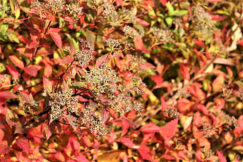 Seasonal Gift Cards For all Occasions - Autumn Shrub