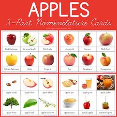 Apples 3 Part Nomenclature Cards.png