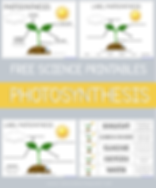 Photosyntheses Science Printables.png