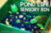 Pond Life Sensory Bin.png
