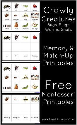 Crawly Creatures Memory and Match Up Pri