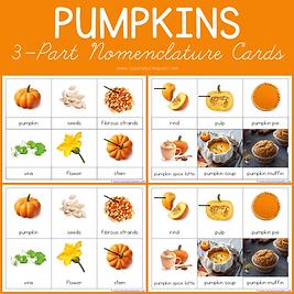 Pumpkins 3 Part Nomenclature Cards.png