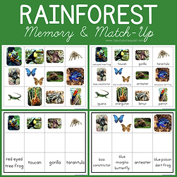 Rainforest Memory and Match Up.png