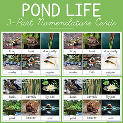 Pond Life 3 Part Nomenclature Cards.png