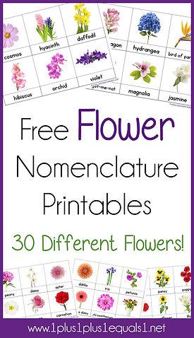 Flower Nomenclature Printables.jpg
