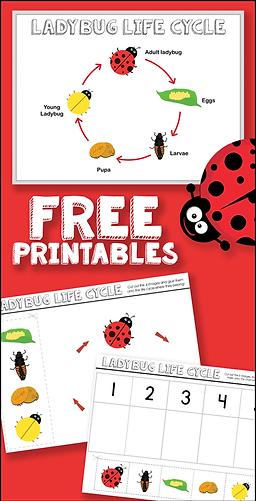 Free Ladybug Life Cycle Printables.png