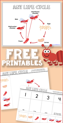 Free Ant Life Cycle Printables.png