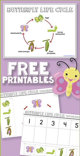 Free Butterfly Life Cycle Printables.png