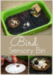 Bird Sensory Bin.jpg