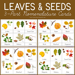Leaves and Seeds 3 Part Nomenclature Cards.png