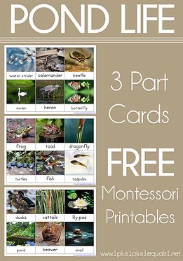 Pond Life 3 Part Cards Montessori Nomenc