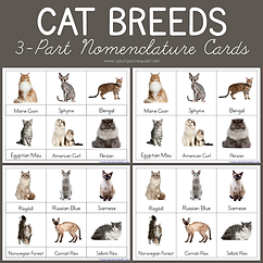 Cat Breeds 3 Part Nomenclature Cards.png