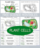 Plant Cell Science Printables.png