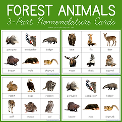 Forest Animals 3 Part Nomenclature Cards