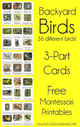 Backyard Birds Nomenclature Printables.j