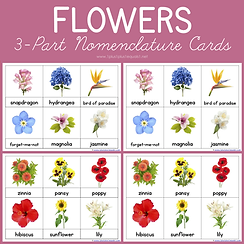 Flowers 3 Part Nomenclature Cards.png