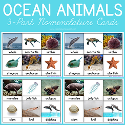 Ocean Animals 3 Part Nomenclature Cards.