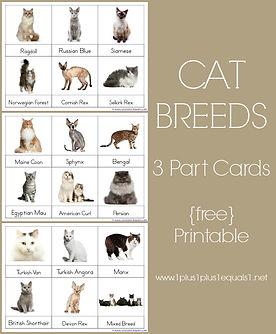 Cat Breed 3 Part Cards.jpg