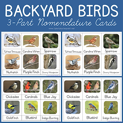 Backyard Birds 3 Part Nomenclature Cards